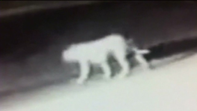 dnt ca mystery animal caught on tape_00011425.jpg