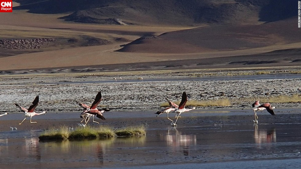 "The sight of rare Andean flamingos convinced <a href=""http://ireport.cnn.com/docs/DOC-1155762 "">Fred Knight</a> to get off his bicycle on the Sico Pass near the Argentina-Chile border."