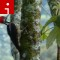 irpt birds Jack Donnelly Linneated woodpecker FULL SIZE