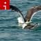 irpt birds seagulls Renee Governale FULL SIZE