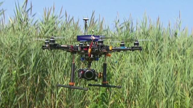 Bird, plane, drone?