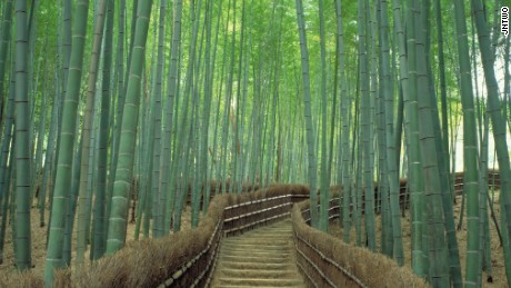 Japan's Sagano Bamboo Forest.