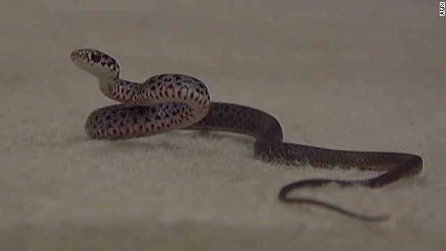 dnt snakes infest home_00001220.jpg
