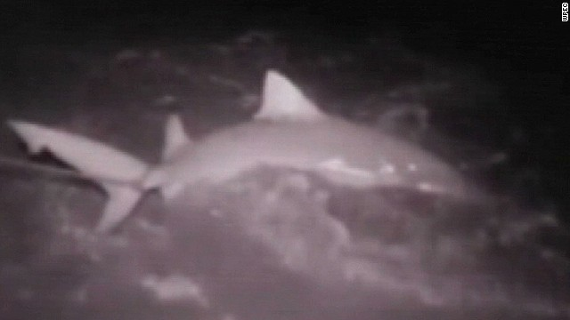 snt teen girl catches huge shark florida_00010010.jpg
