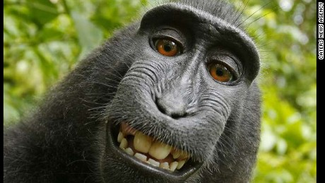 Monkey selfie starts legal battle