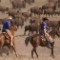 Exceptional Experiences World Buffalo Roundup