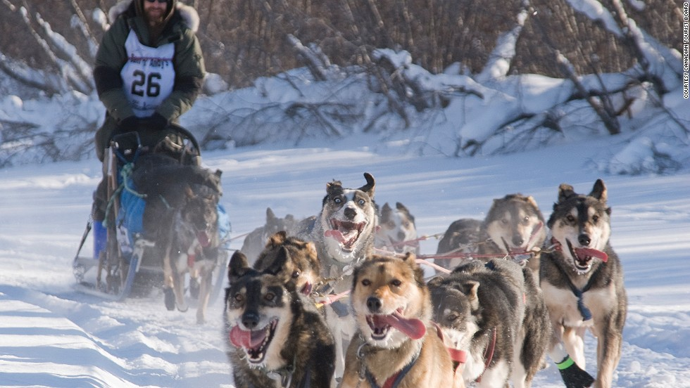 "<strong>Dog mushing (Canada)</strong>: When your team of faithful friends aren't whizzing you across Yukon's ice plains, you'll sleep in a tent with a wood stove, in a throwback to the days before commercialized mushing tours ""softened down for the arm-chair traveler,"" says the company."
