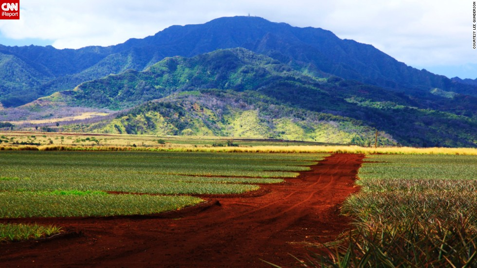 """The <a href=""""http://www.dole-plantation.com/"""" target=""""_blank"""">Dole Plantation </a>has hundreds of acres of<a href=""""http://ireport.cnn.com/docs/DOC-954828""""> pineapple fields</a> dedicated to cultivating and growing Hawaii's sweet and tart fruit. The plantation, a popular attraction in Oahu, says it draws more than 1 million visitors annually."""