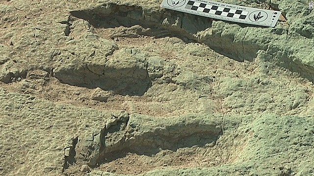 125,000,000-year-old dino tracks found
