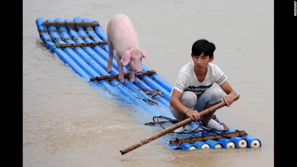 A man rows a makeshift raft as he and a pig travel through a flooded village in Lishui, China, on Wednesday, August 20.