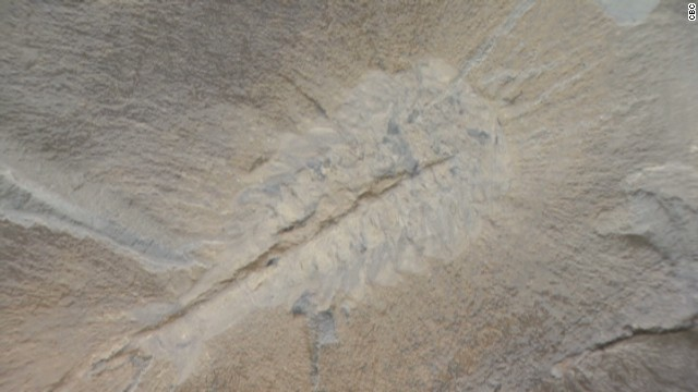 dnt fossils unknown species discovered_00021015.jpg