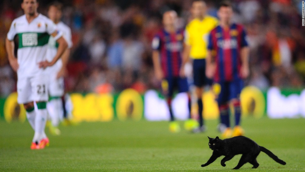 A cat runs on the pitch during a Spanish La Liga soccer match between FC Barcelona and Elche at the Camp Nou stadium in Barcelona, Spain, on Sunday, August 24. FC Barcelona won 3-0.