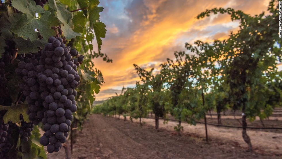 Napa Valley was designated the first American Viticultural Area in California in 1981. About 30 miles long and ranging from one to five miles wide, it's about one-eighth the size of Bordeaux.