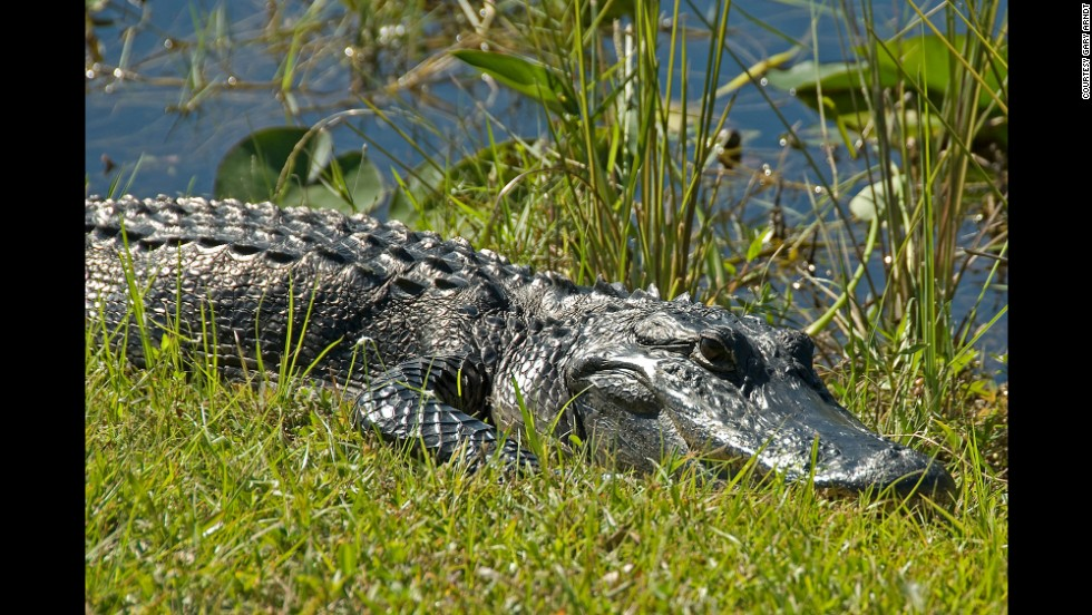 Everglades National Park in Florida is the largest protected wilderness area east of the Mississippi River.