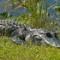 06_Florida Everglades
