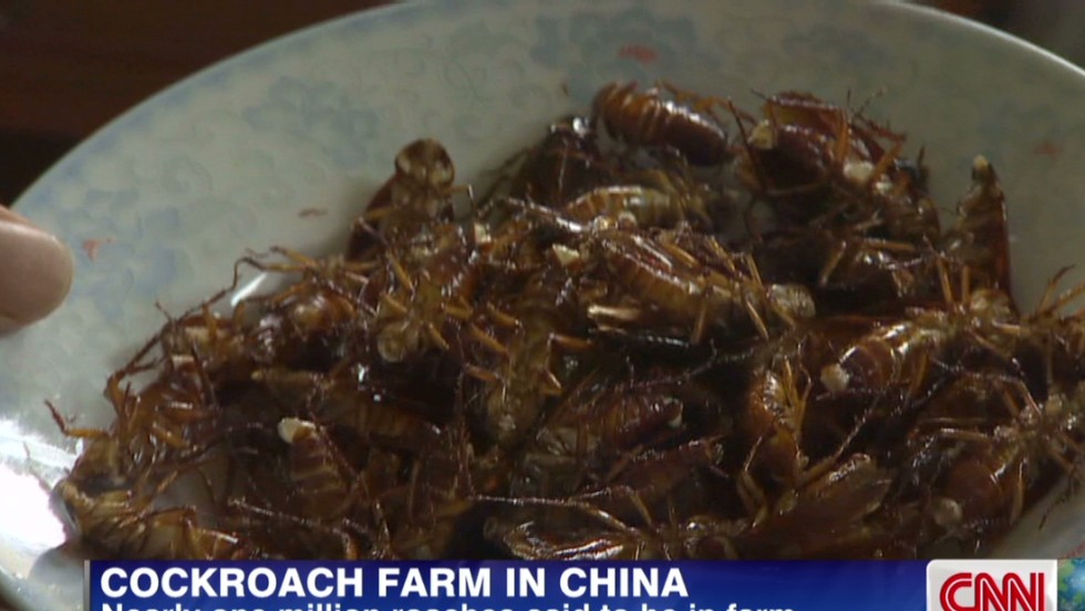 Cockroach milk -- protein powerhouse you didn't know you ...