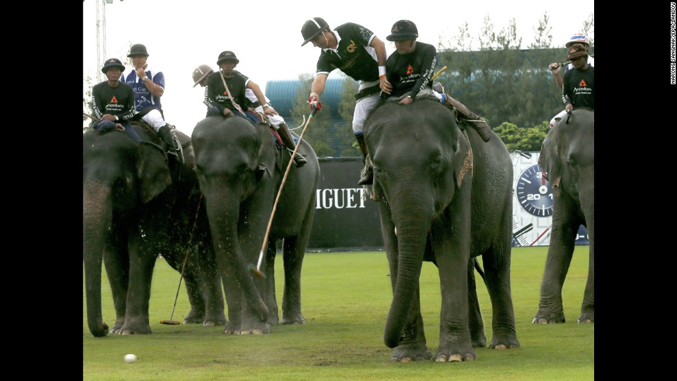 Players compete in the finals of the King's Cup Elephant Polo Tournament on Sunday, August 31, near Bangkok, Thailand. Sixteen teams representing 40 nations took part in the charity event, which raised money for elephant conservation.