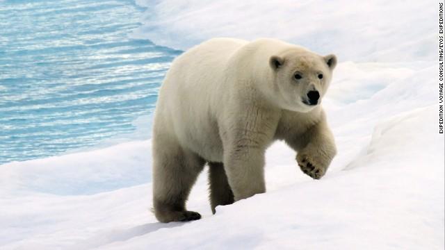 El Ártico tiene menos hielo que nunca