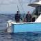 01 700 Pound swordfish