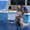 02 700 Pound swordfish