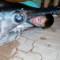 06 700 Pound swordfish