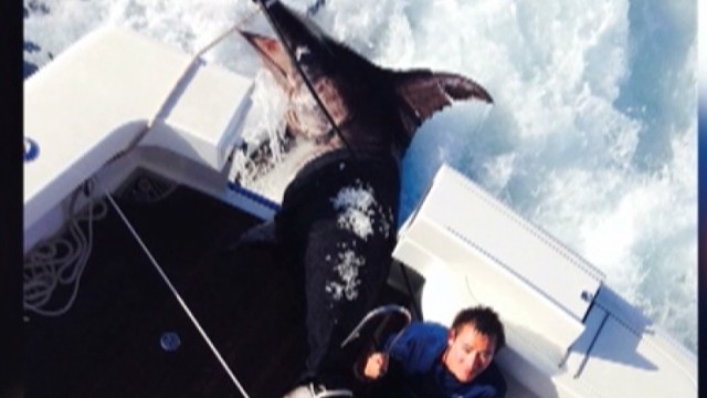 dnt 700 pound swordfish caught _00004025.jpg
