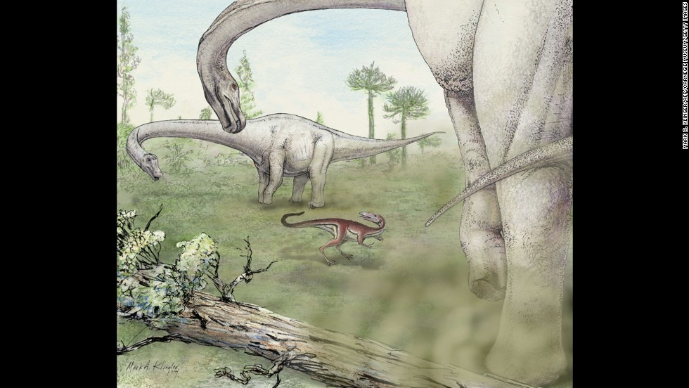 The Dreadnoughtus schrani lived in the Upper Cretaceous period, or between 100 and 65 million years ago, and towered over everything in sight.