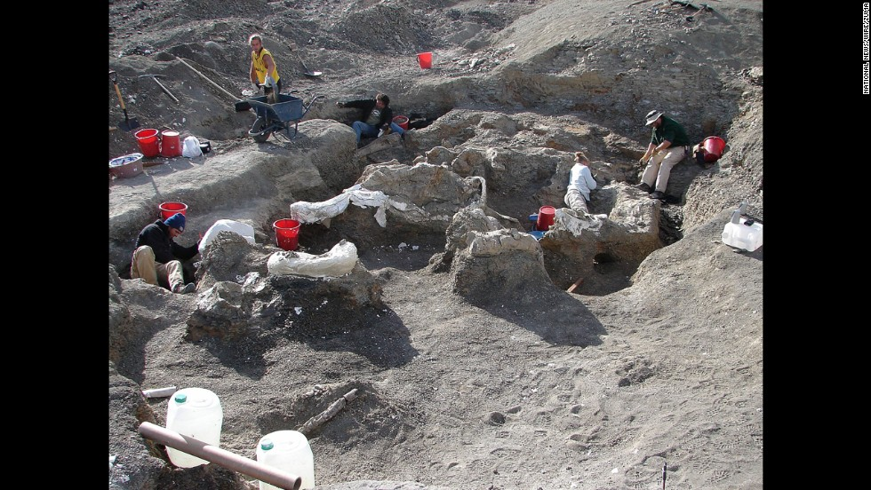 Teams worked for parts of five years in Argentina's southern Patagonia region to unearth the remarkably well-preserved specimen.