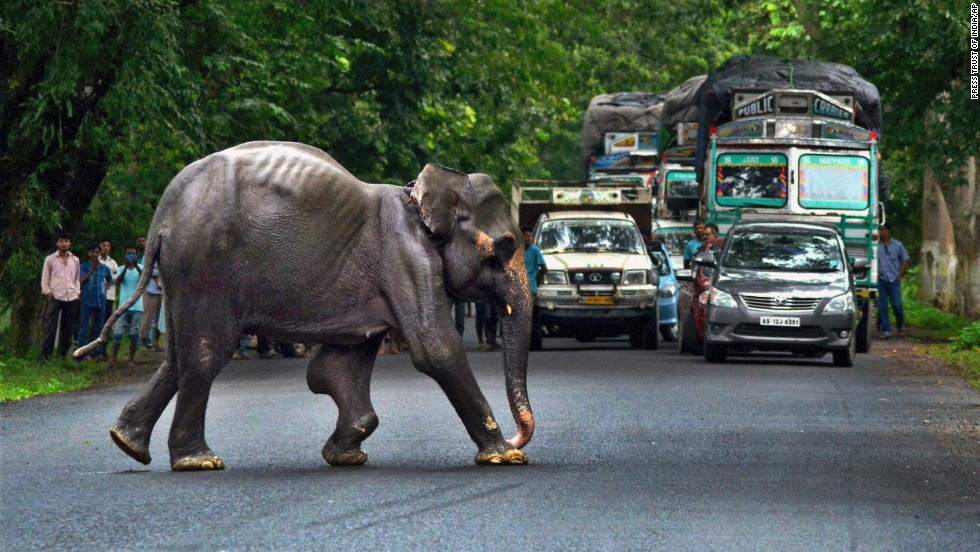 Commuters watch a wild elephant cross a highway as it tries to escape to higher ground after floodwaters submerged large areas of Kaziranga National Park, a wildlife reserve in India, on Monday, August 25.