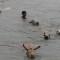 12 india flooding 0905