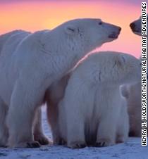 140909173608 photo vacation polar bears t3 entertainment