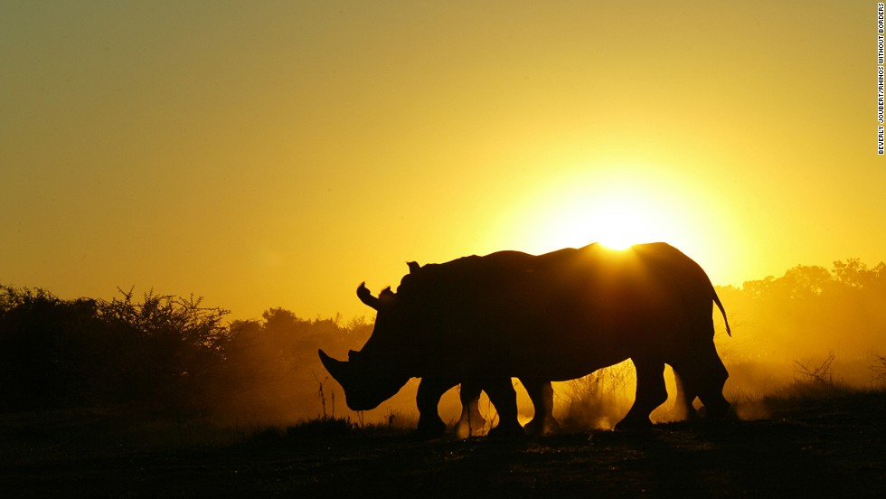 1,020 rhinos poached in 2014 alone