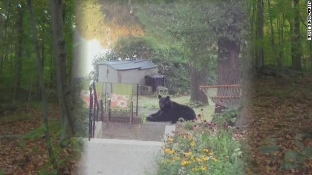 dnt Rutgers student dies bear attack hiking_00003105.jpg