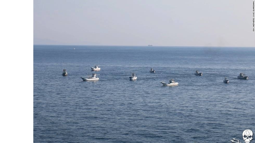 """According to Sea Shepherd, the dolphin hunt boats create a wall of sound that is deafening to the dolphin pod. This allows them to drive the pod into shallow water, and eventually the """"killing cove."""""""