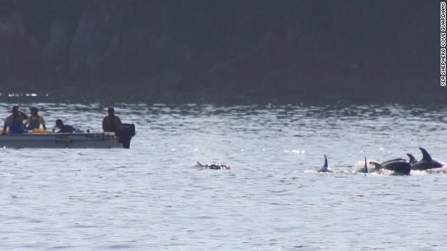 Dolphin hunting season begins in Japan