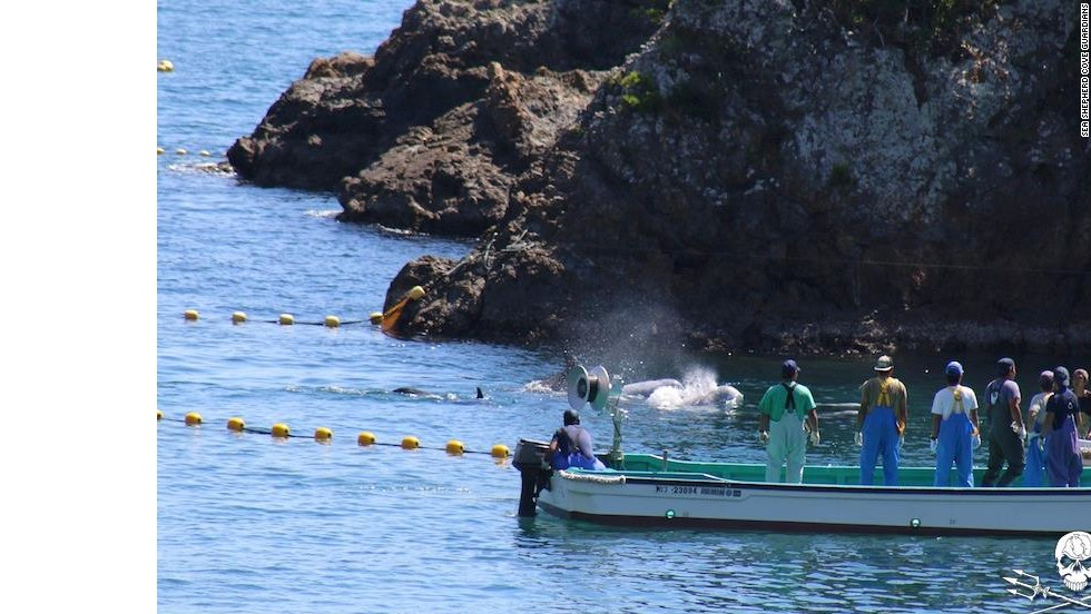 """According to Sea Shepherd, the dolphin hunters """"smiled and laughed"""" as they continued to herd the pod."""