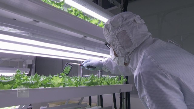 spc one square meter japan hydroponic vegetable farms_00015703.jpg