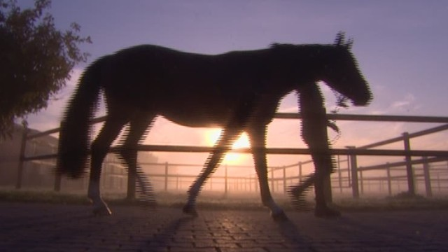 spc equestrian jan hein swagemakers_00020824.jpg