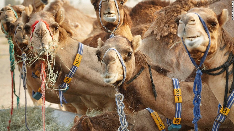 """A guest at the Loews Ventana Canyon resort in Tucson, Arizona, wanted to know where he could purchase two camels. Lead concierge Victoria Cote found a dealer, but the guest chose not to buy them citing """"a missing hump."""""""