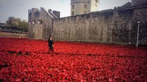 Sea of poppies commemorates WWI dead