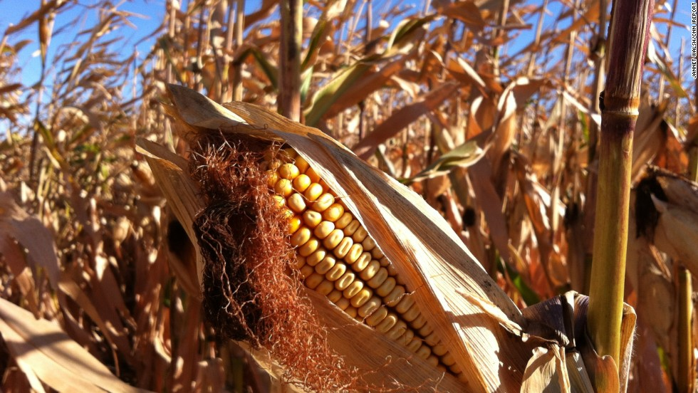 """It was a cold morning when <a href=""""http://ireport.cnn.com/docs/DOC-845872"""">Jannet Walsh</a> remembers seeing Murdock, Minnesota, farmers starting to harvest their crops in September 2012."""