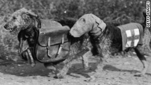 Honoring Britain's WWI 'war dogs'