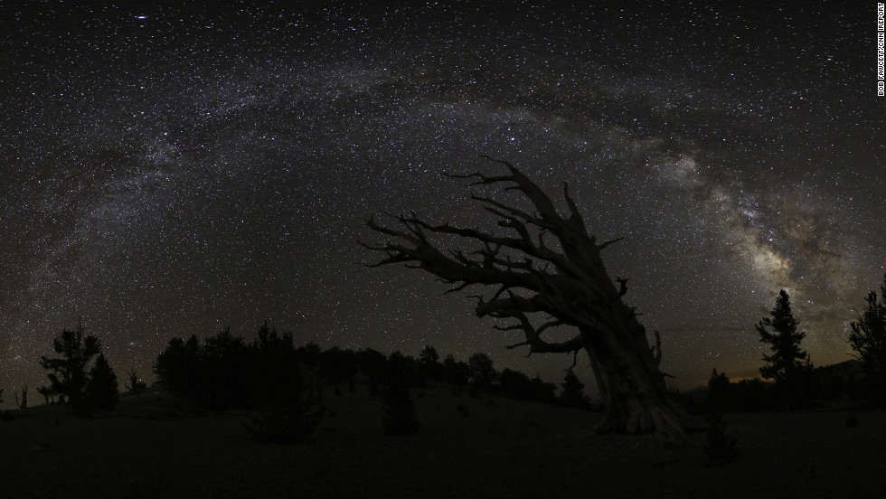 "The<a href=""http://ireport.cnn.com/docs/DOC-1049110""> Milky Way </a>twinkles over the <a href=""http://www.fs.usda.gov/detail/inyo/specialplaces/?cid=stelprdb5129900"" target=""_blank"">Ancient Bristlecone Forest</a> near Big Pine, California. The tree near the center of the photograph is the Great Basin bristlecone pine tree. The oldest known tree of this type is more than 5,000 years old."