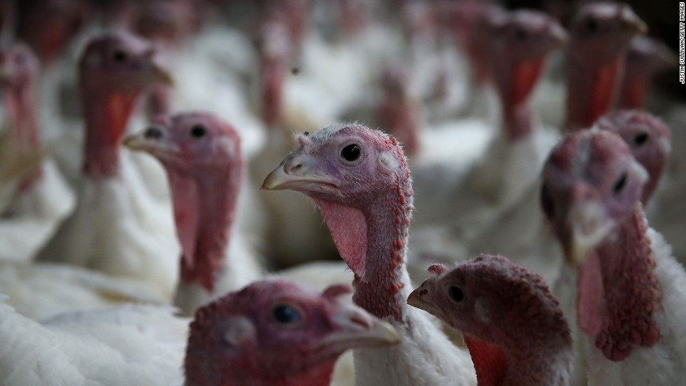 Thanksgiving is full of numbers -- some big, some astonishing. For example, this Thanksgiving Americans will eat an estimated 46 million turkeys. That's a lot of bird.