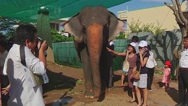 pkg sesay cambodia elephant retirement_00002318.jpg