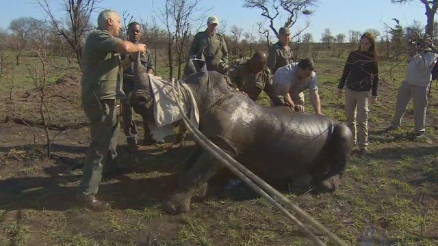 pkg rhino relocation_00031003.jpg