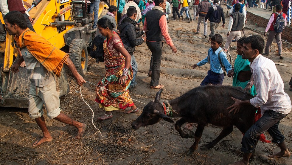 Devotees walk toward the main entrance of the sacrifice area carrying a water buffalo during the celebration of the Gadhimai festival on November 28 in Nepal.
