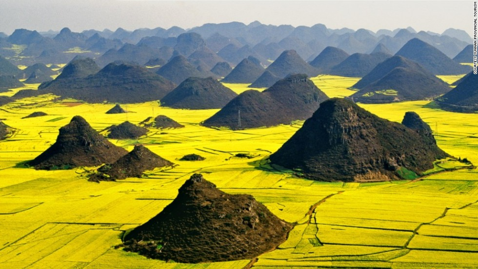 Neon-yellow canola flowers blanket China's Luoping Basin in March. Each spring a festival celebrates the bright sea of golden flowers.