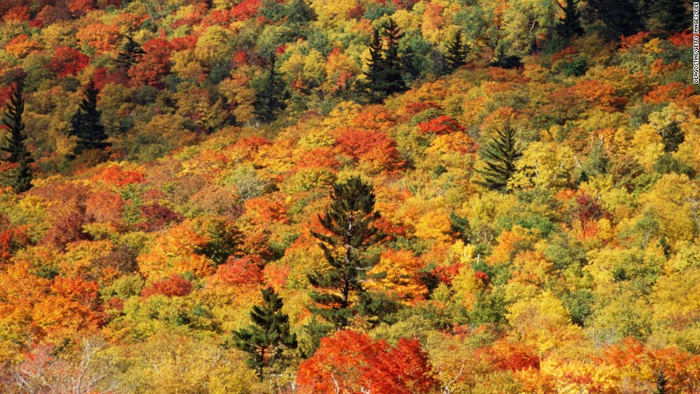 Deciduous trees in the Northeastern United States create a tapestry of rich colors in the fall. While familiar to U.S. travelers, the colorful leaves never fail to draw hordes of autumn