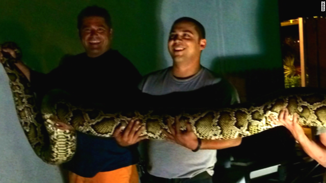 15-foot python found at restaurant